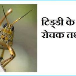 Locust Information In Hindi