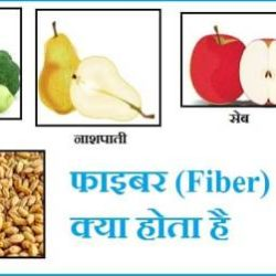 What Is Fiber In Hindi