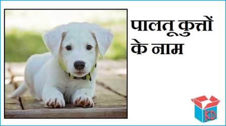 Dogs Name In Hindi