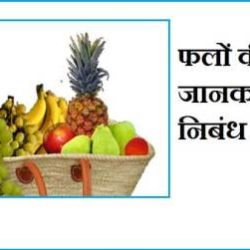 Information About Fruits In Hindi