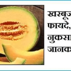 Muskmelon In Hindi