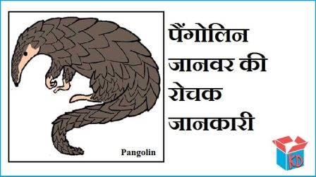 Information About Pangolin Animal In Hindi