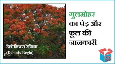 Gulmohar Tree Information In Hindi