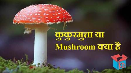 Information About Mushroom In Hindi