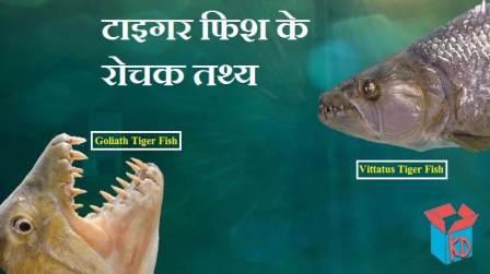 Tiger Fish Facts In Hindi