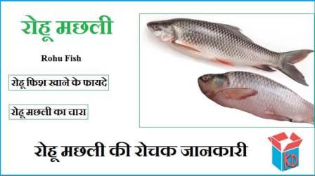 Rohu Fish Information In Hindi