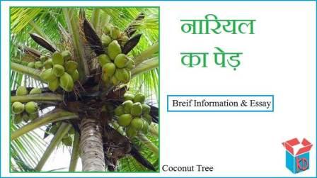 Coconut Tree Information In Hindi